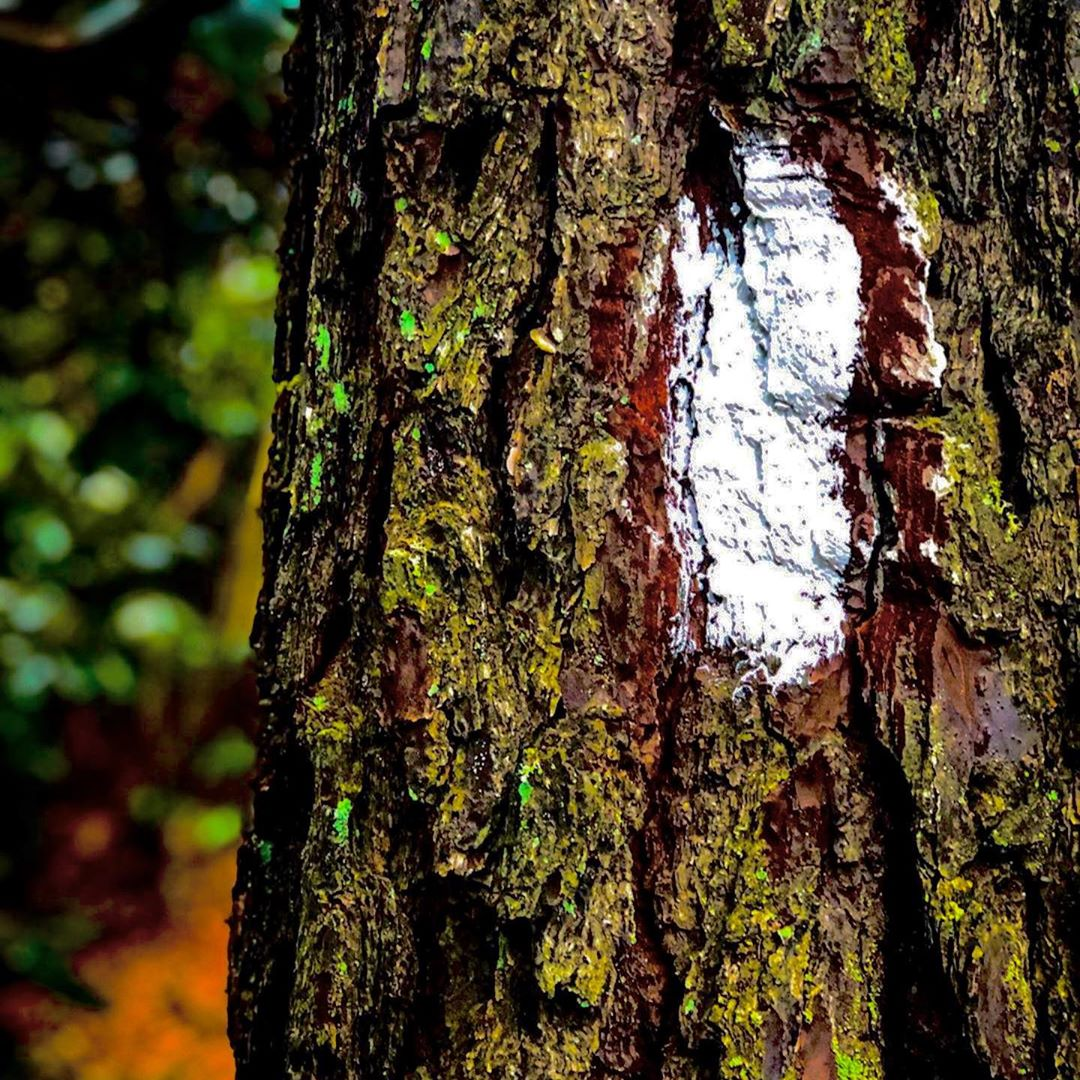 How To Read and Follow Trail Blazes in North America